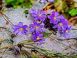 diaporama pps 1er sourire du printemps