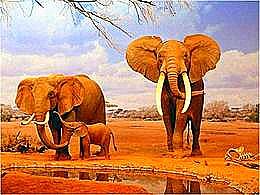 diaporama pps Afrique 2