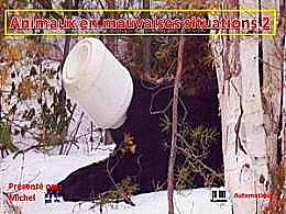 diaporama pps Animaux en mauvaises situations 2