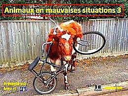 diaporama pps Animaux en mauvaises situations 3