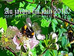 diaporama pps Au jardin fin juin 2016