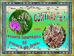 diaporama pps Contraste entre fleurs sauvages fleurs de luxe