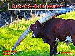 diaporama pps Curiosités de la nature 7