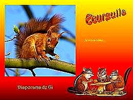 diaporama pps Des écureuils