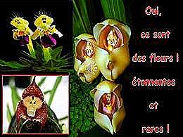 diaporama pps Des fleurs surprenantes et rares