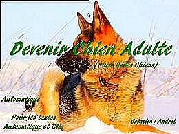 diaporama pps Devenir chien adulte