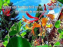 diaporama pps Des fleurs de mon jardin dernière fois 2016