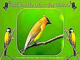 diaporama pps Fascinant le chant des oiseaux