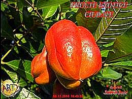 diaporama pps Fructe exotice ciudate
