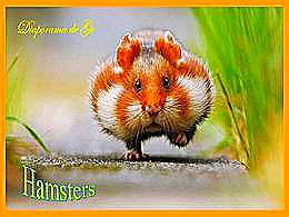 diaporama pps Hamsters