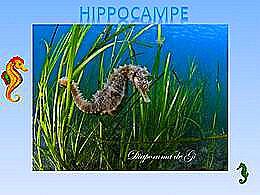 diaporama pps Hippocampe