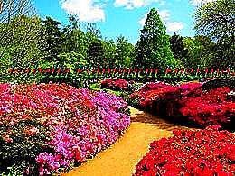 diaporama pps Isabella plantation england