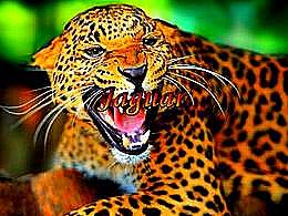 diaporama pps Jaguar