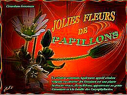 diaporama pps Jolies fleurs de papillons