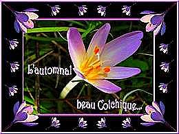 diaporama pps L'automnal beau colchique