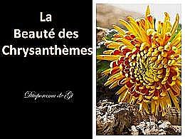 diaporama pps La beauté des chrysanthèmes