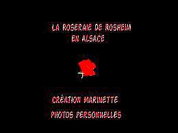 diaporama pps La roseraie de Rosheim en Alsace N°2