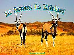 diaporama pps La Savane – Le Kalahari