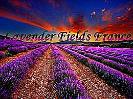diaporama pps Lavender fields France