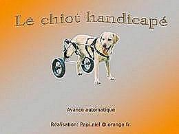 diaporama pps Le chiot handicapé