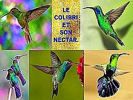 diaporama pps Le colibri et son nectar