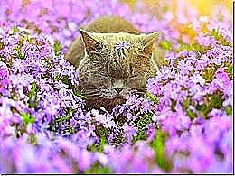 diaporama pps Le printemps des animaux