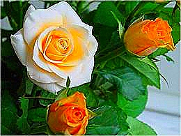 diaporama pps Le temps des fleurs