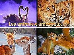 diaporama pps Les animaux amoureux
