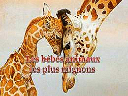 diaporama pps Les bébés animaux les plus mignons