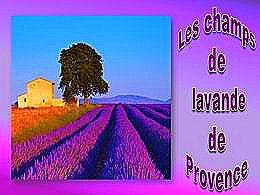 diaporama pps Les champs de lavande de Provence