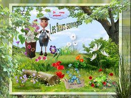 diaporama pps Les fleurs sauvages