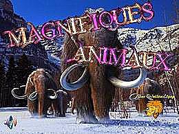 diaporama pps Magnifiques animaux
