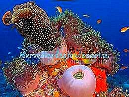 diaporama pps Merveilles des fonds marins