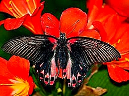 diaporama pps Montréal botanical garden butterflies Canada
