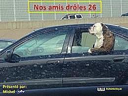 diaporama pps Nos amis drôles 26