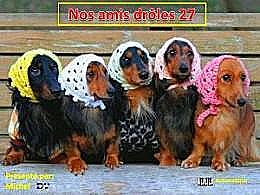 diaporama pps Nos amis drôles 27