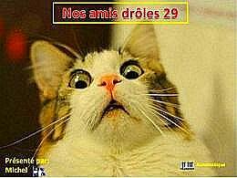 diaporama pps Nos amis drôles 29