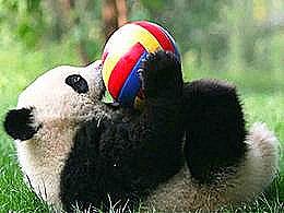 diaporama pps Pandas