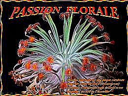 diaporama pps Passion florale