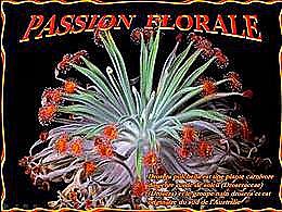 diaporama pps Passion florale