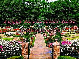 diaporama pps Peggy Rockefeller – Rose garden USA