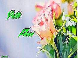 diaporama pps Petite fleur