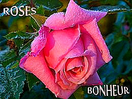 diaporama pps Rose bonheur