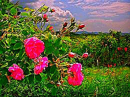 diaporama pps Rose valley bulgaria