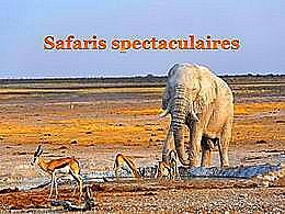 diaporama pps Safaris spectaculaires