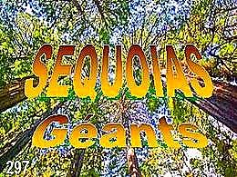 diaporama pps Séquoia géant