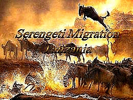 diaporama pps Serengeti migration Tanzania