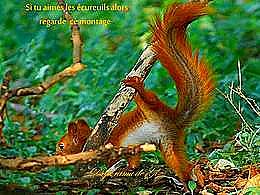 diaporama pps Si tu aimes les écureuils