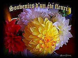 diaporama pps Souvenir d'un été fleuri