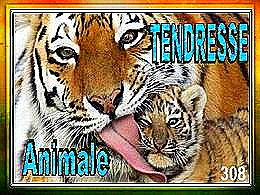 diaporama pps Tendresse animale